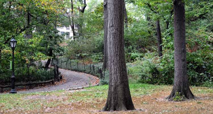 El recorrido por la Villa Séneca es guiado por expertos del Central Park.
