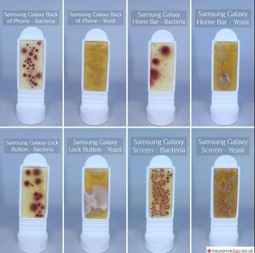 bacterias galaxy