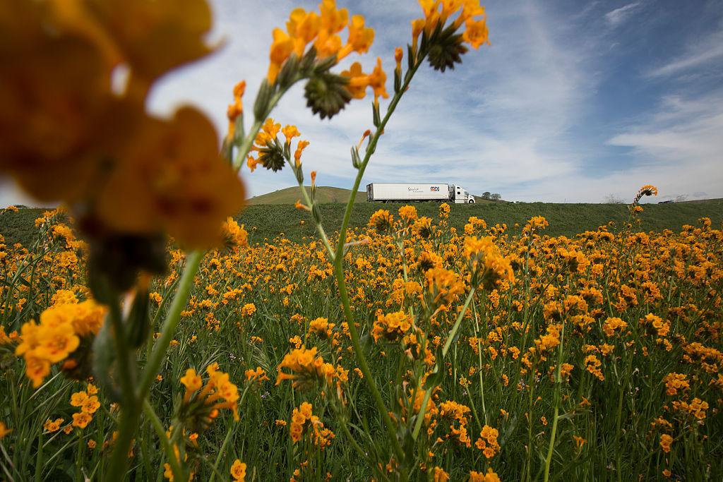 Un camión pasa a lo largo de un campo cubierto de flores silvestres en Tehachapi, California.