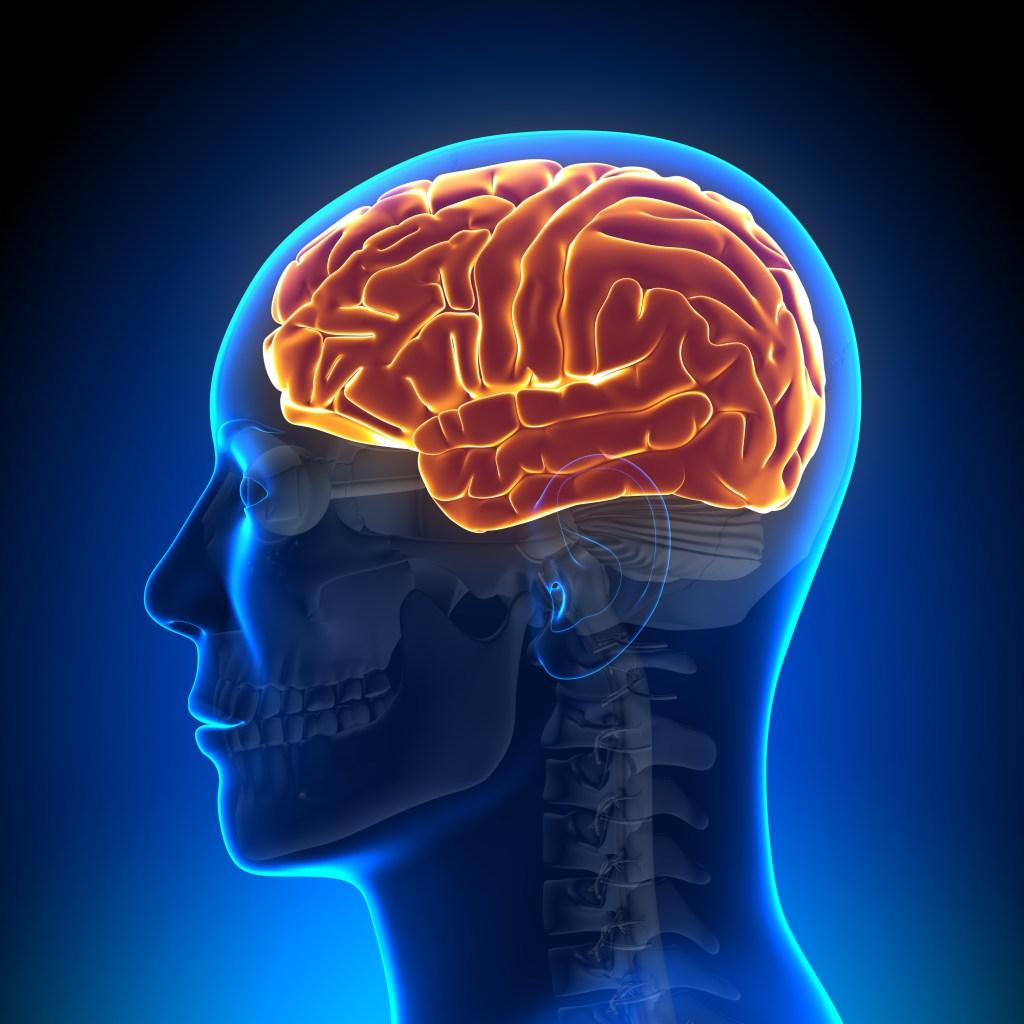 """Según la investigación, el hemisferio izquierdo se mantiene en alerta durante una fase del sueño profundo, conocido como """"sueño de onda lenta""""."""