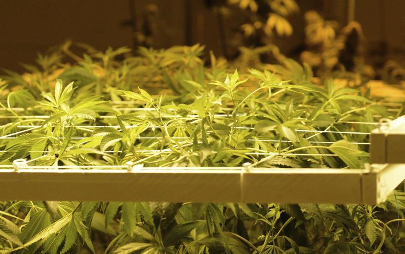 dispensarios marihuana denver colorado