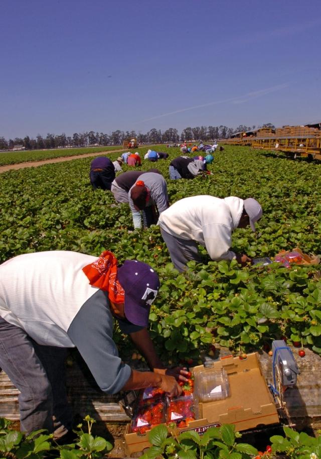 Trabajadores campesinos. (Archivo)