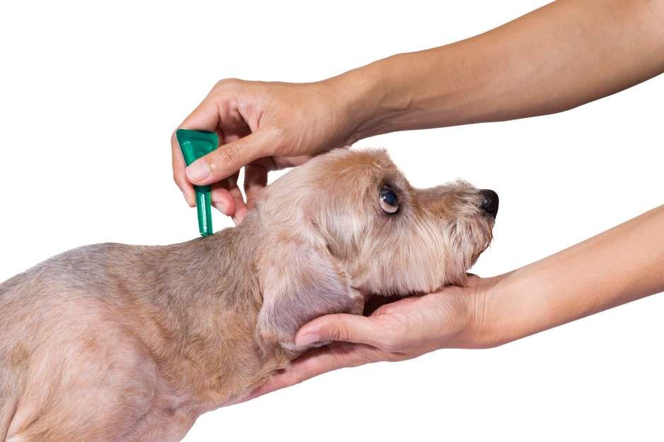 Dependiendo de la marca, edad y peso de la mascota, las pipetas contra las pulgas deben aplicarse cada mes o tres meses.