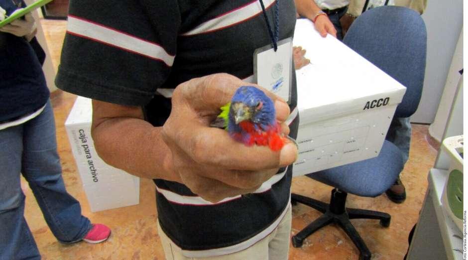 Traficante de aves Cancún