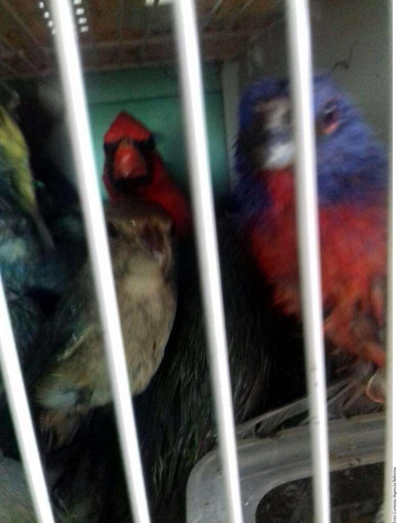 Aves Cancún