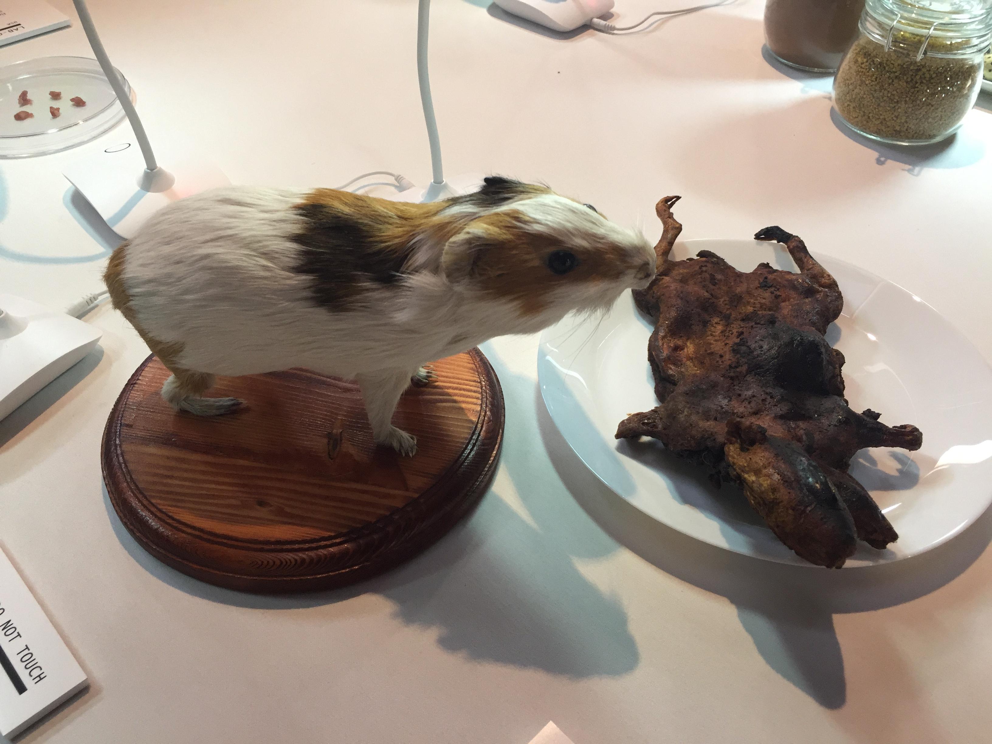El Cuy o guinea pig es muy apreciado en Perú y los países andinos. (Araceli Martínez/La Opinión).