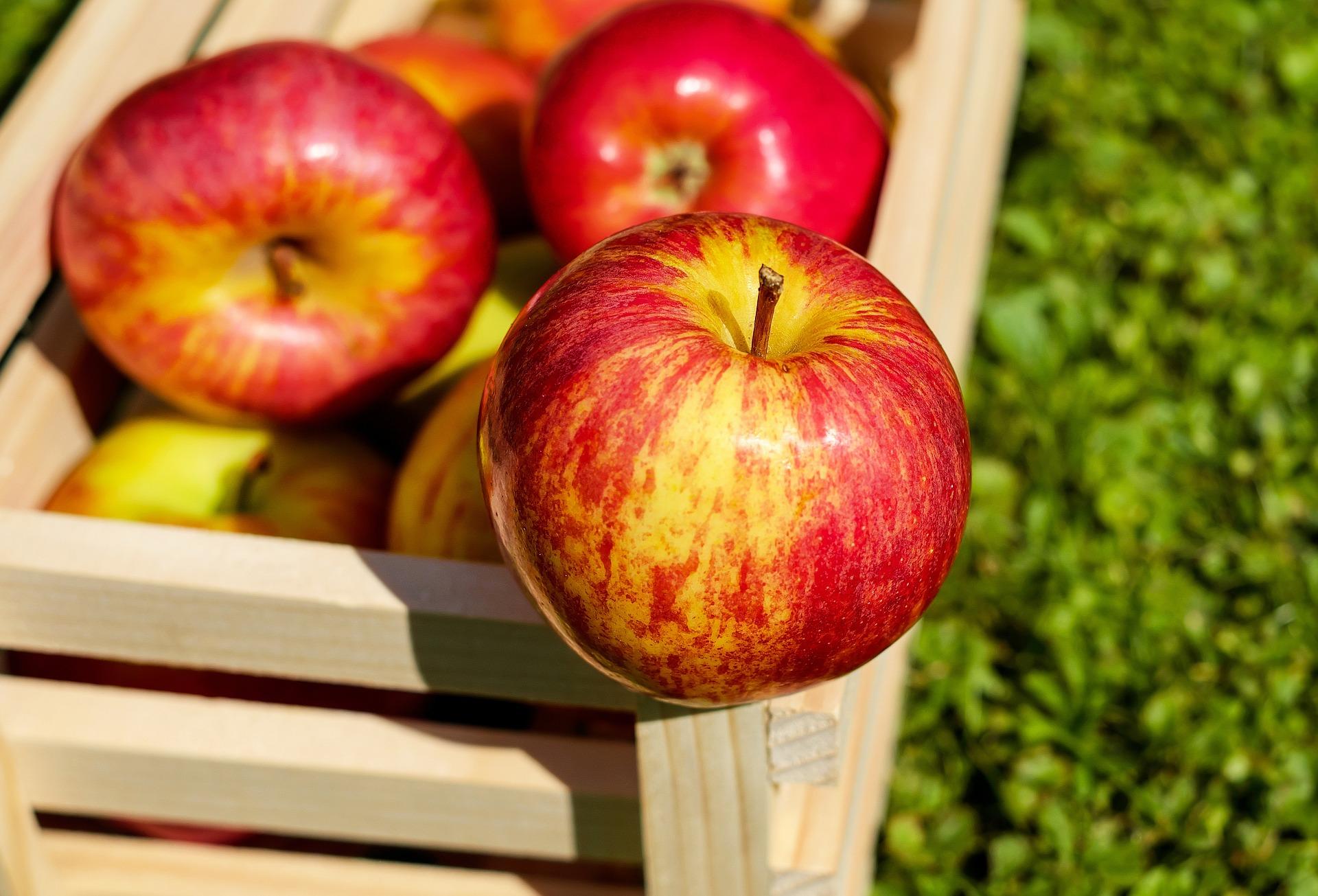 Las manzanas fueron enviadas entre el 16 y 21 de octubre.