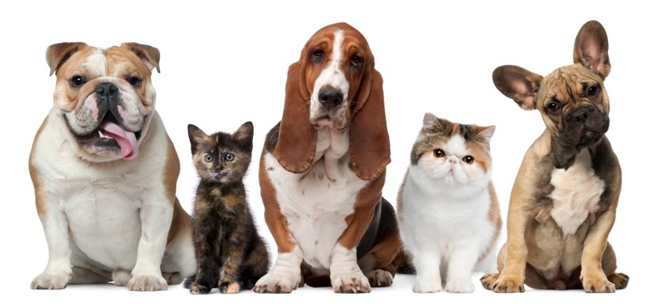 ¿Estás listo para adoptar una mascota?