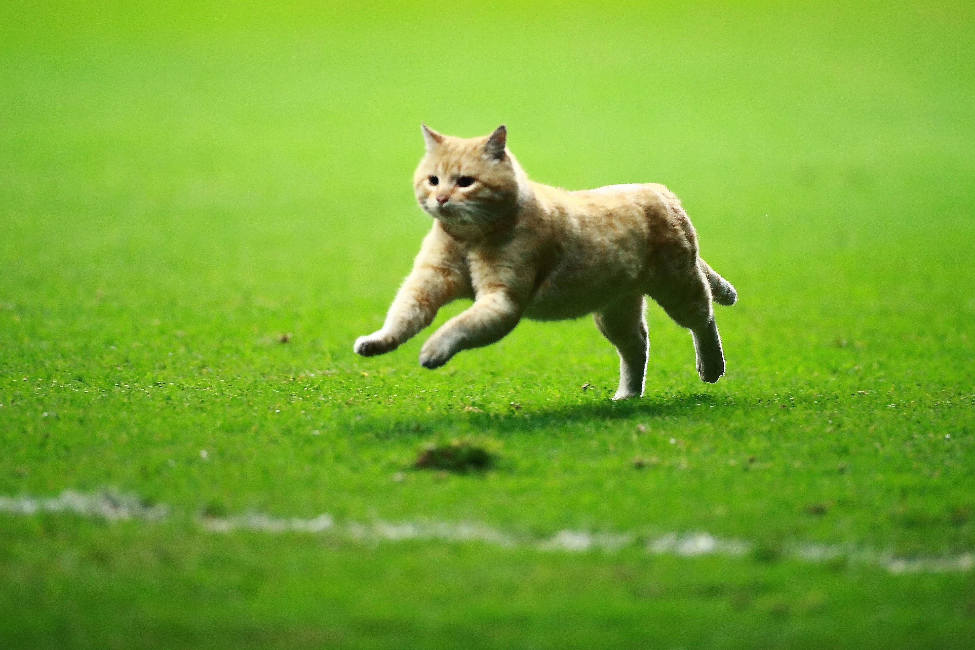 El gato del estadio